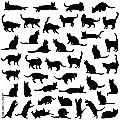 Photo  Cat collection - vector silhouette