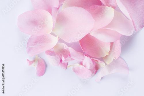 Spoed Foto op Canvas Frangipani Macro shot of beautiful pink rose petals on the white background