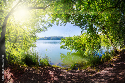 Garden Poster Deep brown ein Waldsee im Land Brandenburg ( Deutschland ) bei Sonnenschein