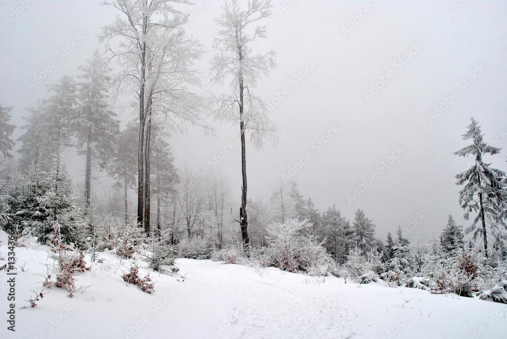 Fototapeta Zimowy pejzaż