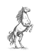 Rearing Horse Vector Sketch Eq...