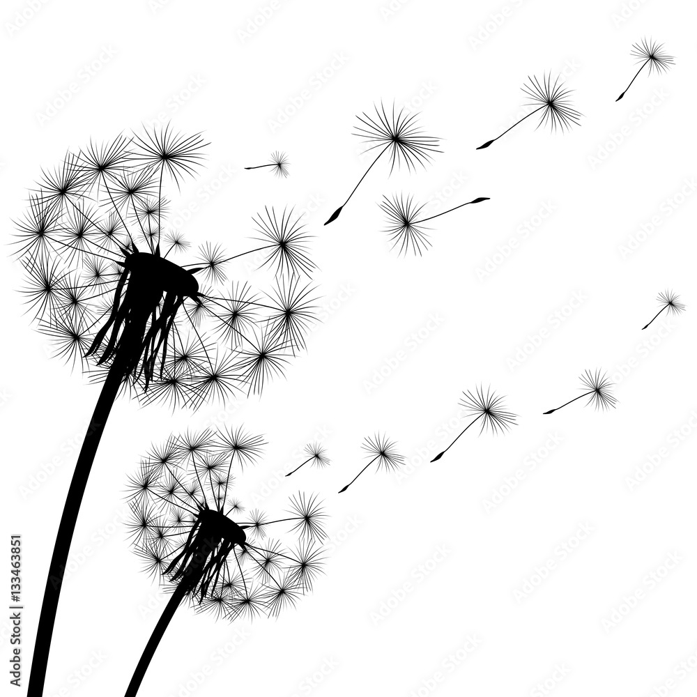 Fototapety, obrazy: black silhouette of a dandelion on  white background