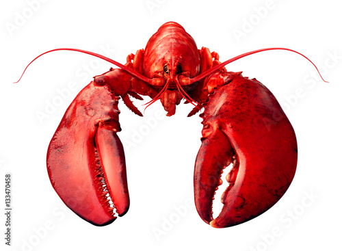 Lobster Front View Poster