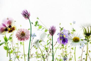 Fototapetasummer flowers