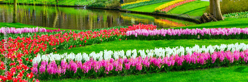 Fotobehang Tuin Colorful tulips and hyacinth flowerbeds in Keukenhof spring garden, Holland
