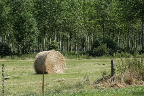 Fotografia, Obraz  Meule de foin dans la campagne, France
