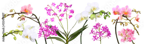 Photo Stands Orchid Orchideen Collage