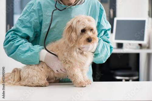 Foto  Hunde- und Tierpflege