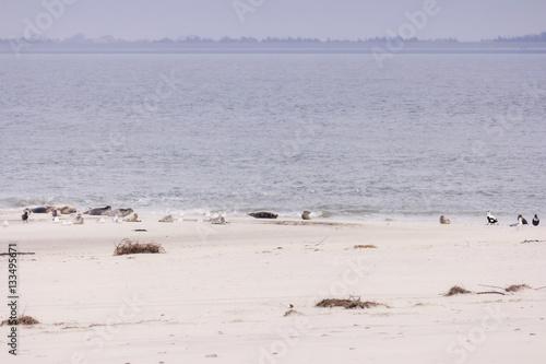 Fotografie, Obraz  Am Strand von Amrum