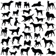 Dog Collection - Vector Silhou...