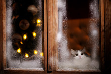 The Cat Looks At The Street Through The Frozen Winter Window