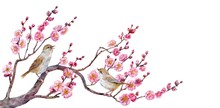 The Little Birds Warbler On Japanese Apricot.  Watercolor.
