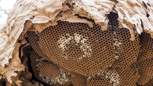 Close Up Of An Empty Wasp Nest.