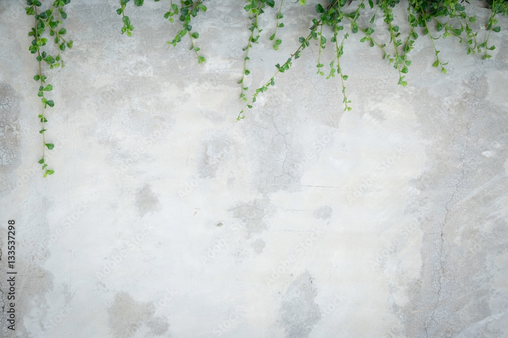 Concrete wall with ornamental plants or ivy or garden tree.