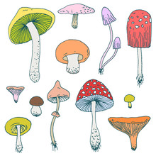 Set Of Forest Mushrooms - Vector Hand Drawn Colorful Sketch. Collection Of Different Mushrooms With Roots, Real Eatable And Poisoned Boletus