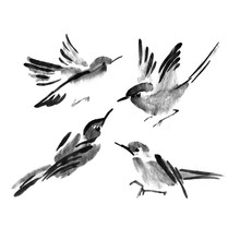 Sumi-e Ink Collection Of Birds...