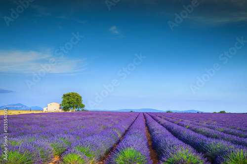 Magical lavender fields in Provence region, Valensole, France, Europe