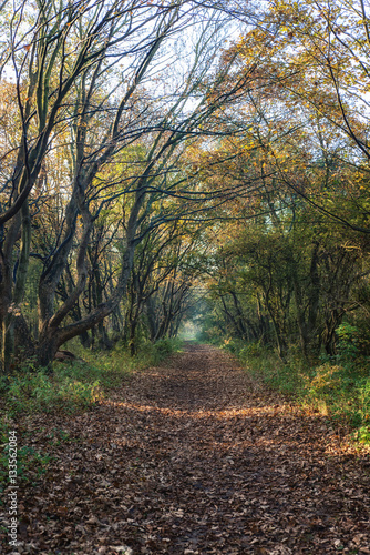 Spoed Foto op Canvas Cappuccino Dreamy forest path
