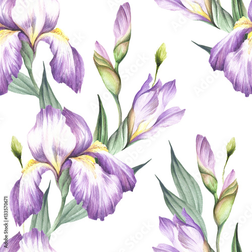 Deurstickers Iris Seamless pattern with iris. Hand draw watercolor illustration.