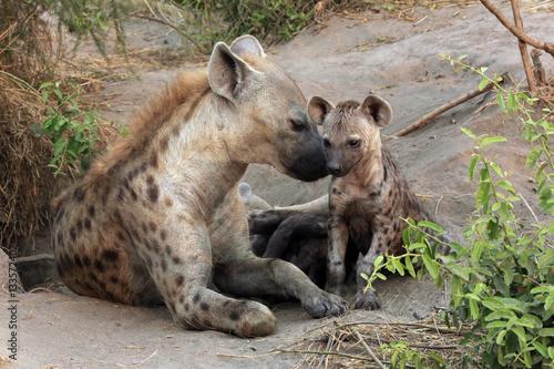 Deurstickers Hyena Spotted Hyena (Crocuta crocuta) with Cubs. Ishasha, Queen Elisabeth, Uganda