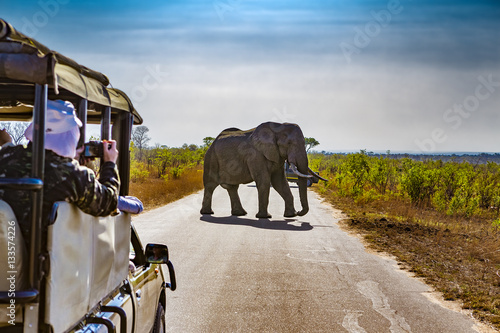 Foto auf Gartenposter Südafrika South Africa. Safari in Kruger National Park - African Elephants (Loxodonta africana)