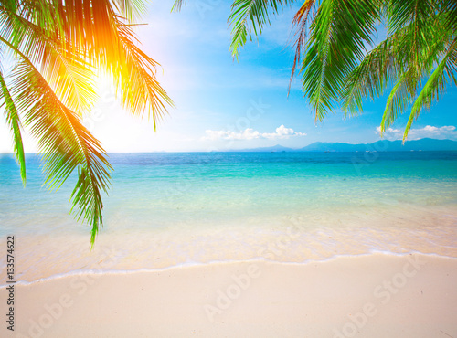 Poster Tropical plage Palm and tropical beach