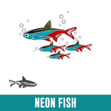 NEON FISH, Paracheirodon Axelr...