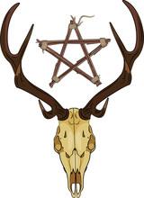 Deer Skull And Pentagram Made Of Twigs