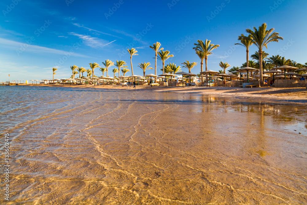 Fototapeta Beautiful sandy beach with palm trees at sunset. Egypt