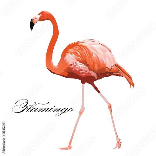 Vector Illustration of a Flamingo.
