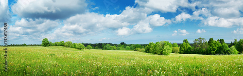 Foto op Plexiglas Weide, Moeras Green field with white dandelions and blue sky. Panoramic view to grass and flowers on the hill on sunny spring day