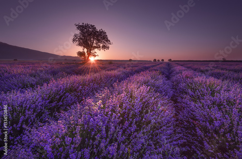 Fotobehang Violet Magnificent lavender field at sunrise with lonely tree. Summer sunrise landscape, contrasting colors.
