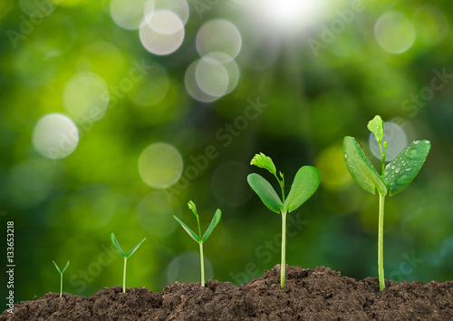 Fotografie, Tablou  Growing sprout on green bokeh and sunlight background