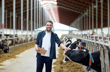 Farmer With Clipboard And Cows...