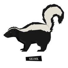 Wild Animals Collection Skunk ...