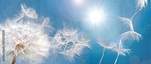 Fotobehang Natuur Abflug / Flugschirme der Pustblume beim Start: Wir fliegen davon, um Wünsche zu erfüllen :)