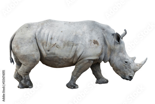 big rhinoceros isolated