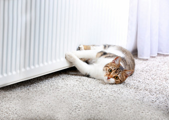 Cute cat lying on carpet near radiator at home