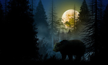 Bear In The Woods At Night