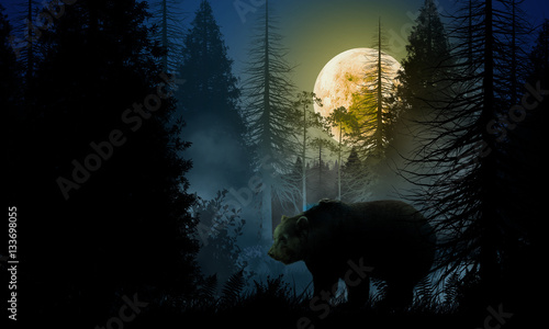 Photo Bear in the woods at night