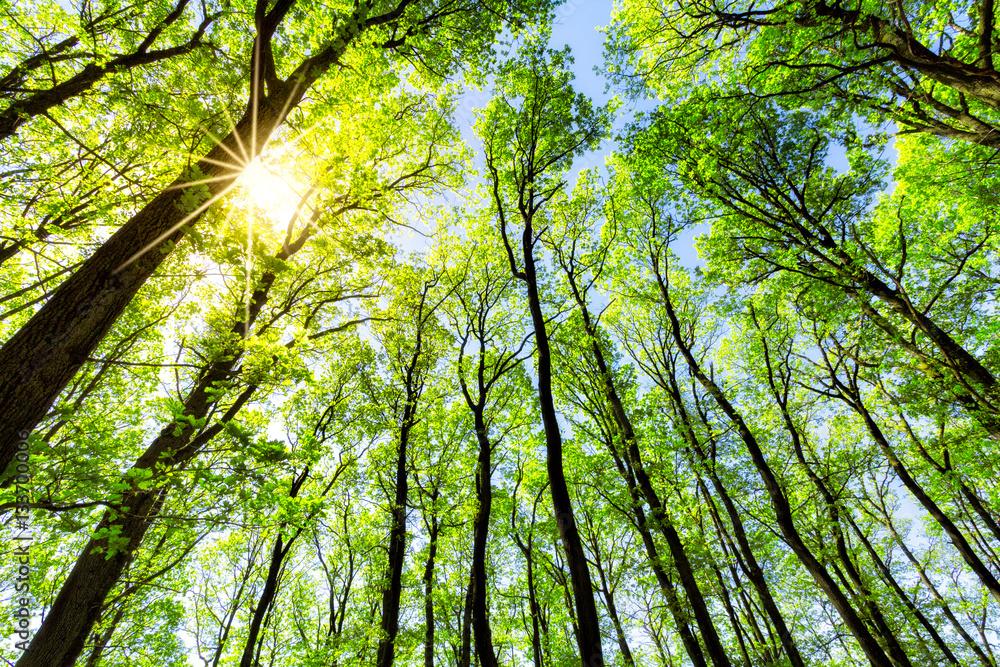 Zielony las w słońcu