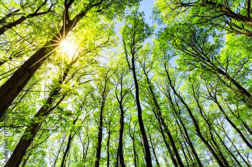 Poster Lime green Grüner Wald im Sonnenlicht