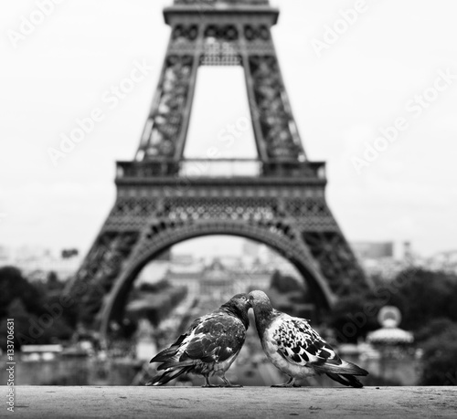 Foto op Canvas Eiffeltoren Pigeons nuzzling near the Eiffel Tower, Paris.