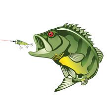 Peacock Bass Strike