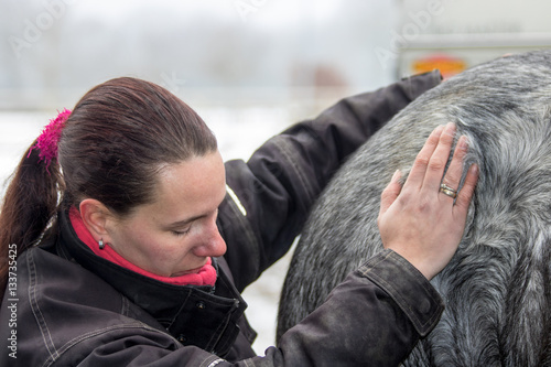 Fotografie, Obraz  horse, equine physical,osteopathy therapy