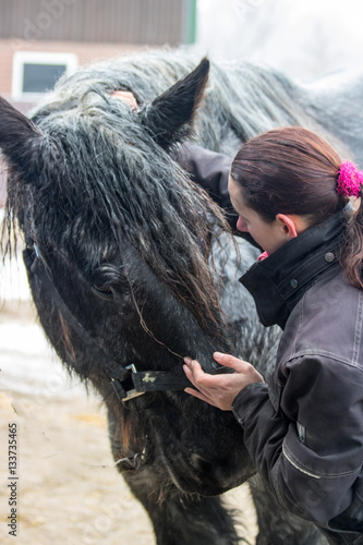 Fotomural horse, equine physical,osteopathy therapy