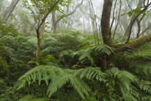 Taiwan Nature Trail In Foggy And Raining Autumn At Yangmingshan National Park In Taipei, Taiwan.
