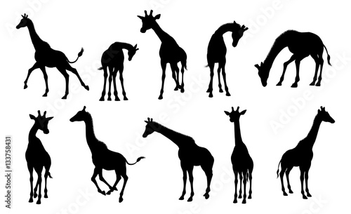 Naklejka premium Sylwetki Zwierząt żyrafa