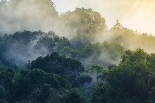 Nature View Of Khao Yai National Park, Thailand
