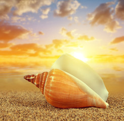 Plakat Tropical sea shell on sandy beach at sunset.